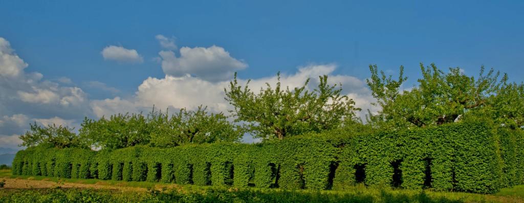 1.tagliataBressana Pasc Armeline di Ara di Tricesimo, la più grande in Regione, di proprietà della famiglia Moretti.
